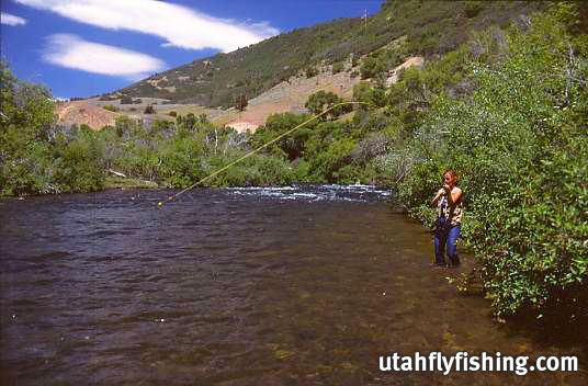 Utah fly fishing guide and outfitter the provo river for Provo river fly fishing
